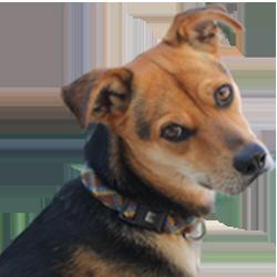 Social Media Marketing tips from my dog